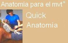 53 Curso Quick anatomía