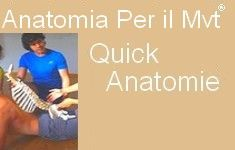 53 Stage Quick Anatomie IT