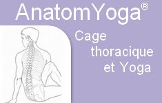 cage thoracique yoga